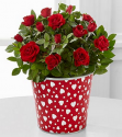 FTD.com: Save Up to $20 on The Early Valentine Sale