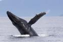 观赏鲸鱼航海生态游